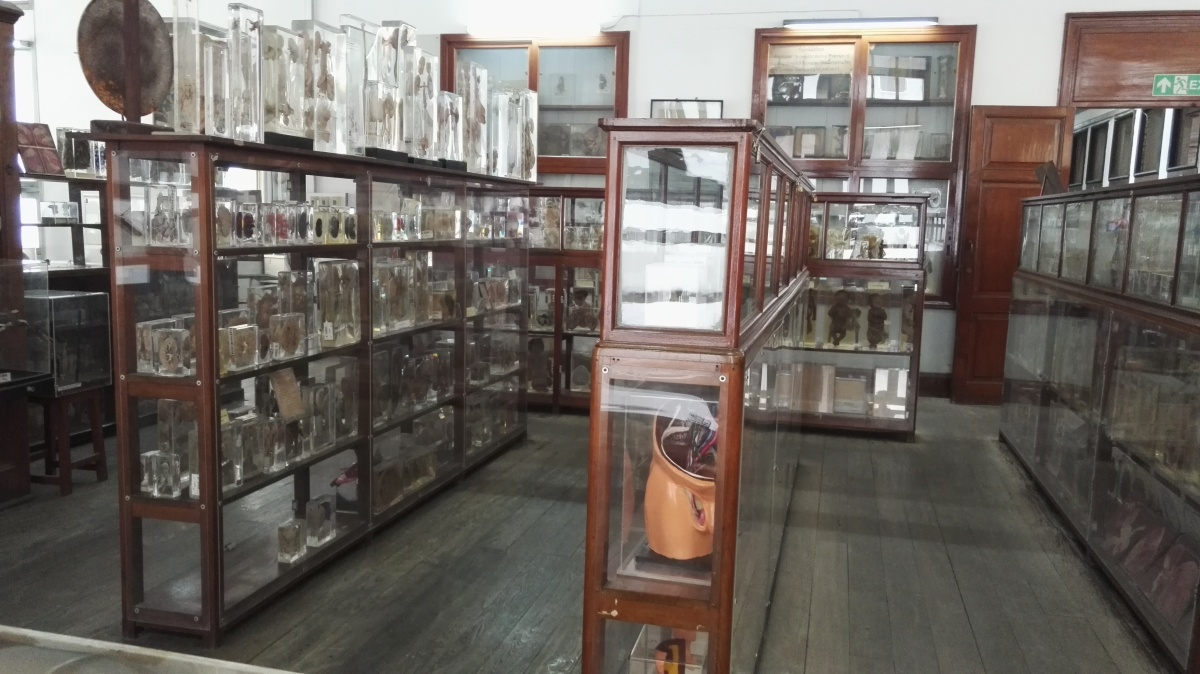 Siriraj Medical aka the Anatomy Museum